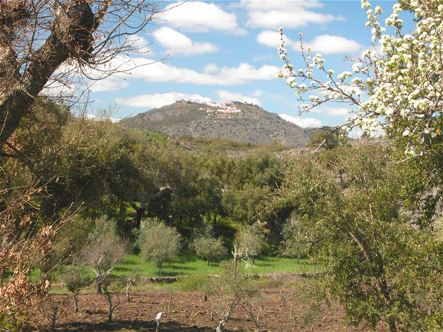 Marvao Portugal viewed from North East through young olive trees and cork oak trees framed by chestnut and cherry trees in spring