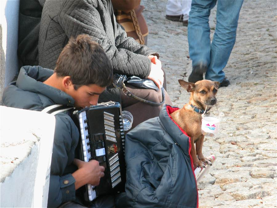 Young Busker playing accordian with small dog wrapped in a coat holding collection money at the Marvao Chestnut Festival